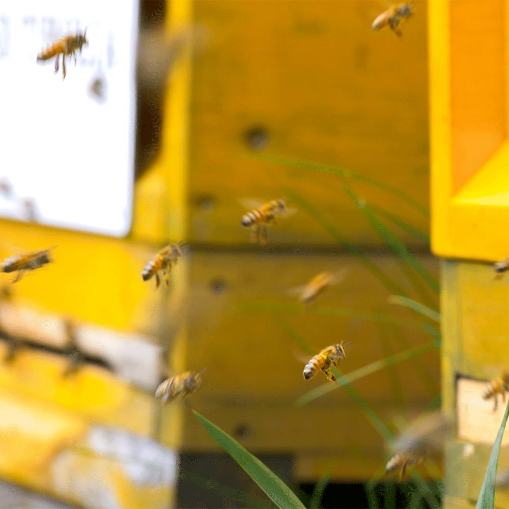 Bienen_02