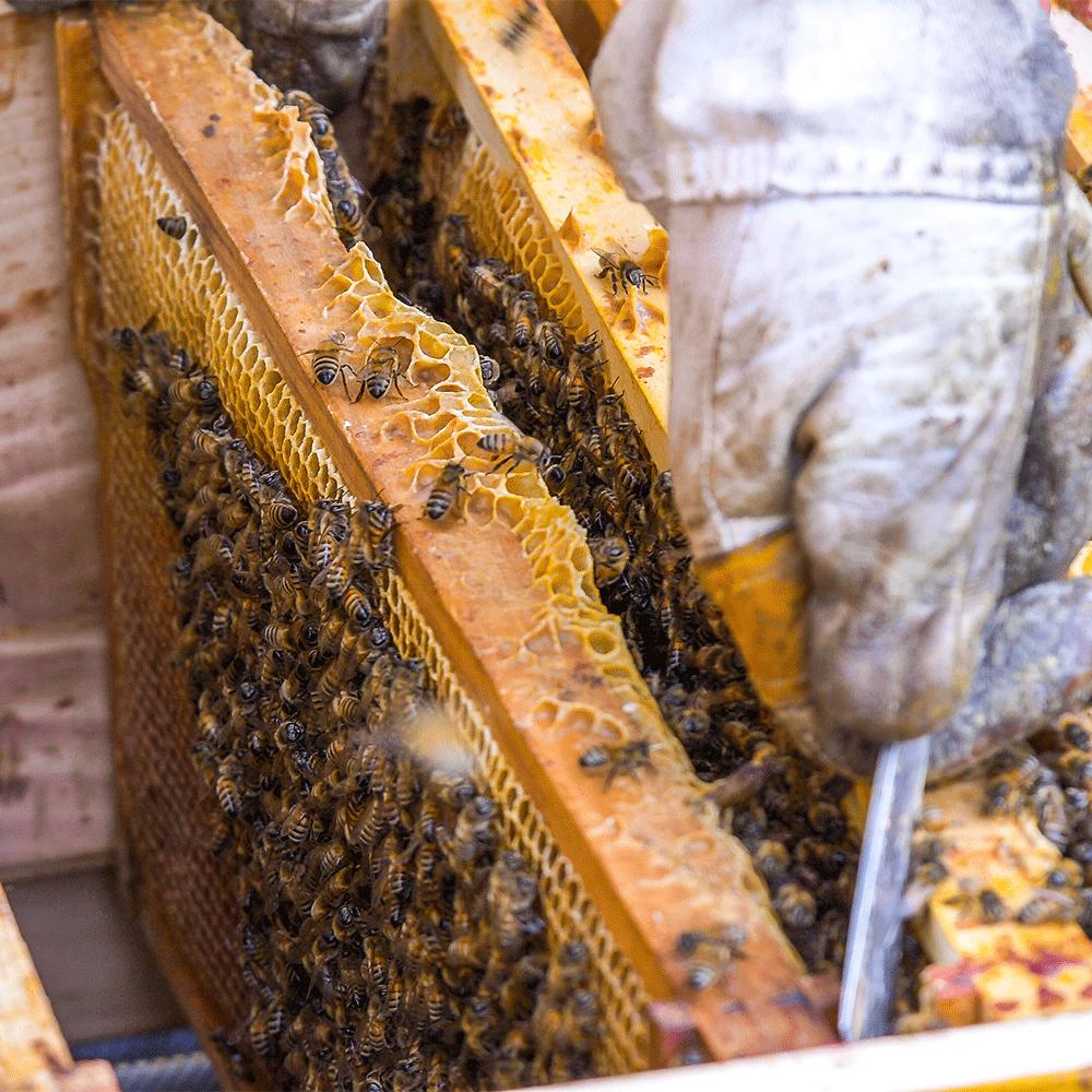 Bienen_04