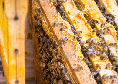 Bienen_07
