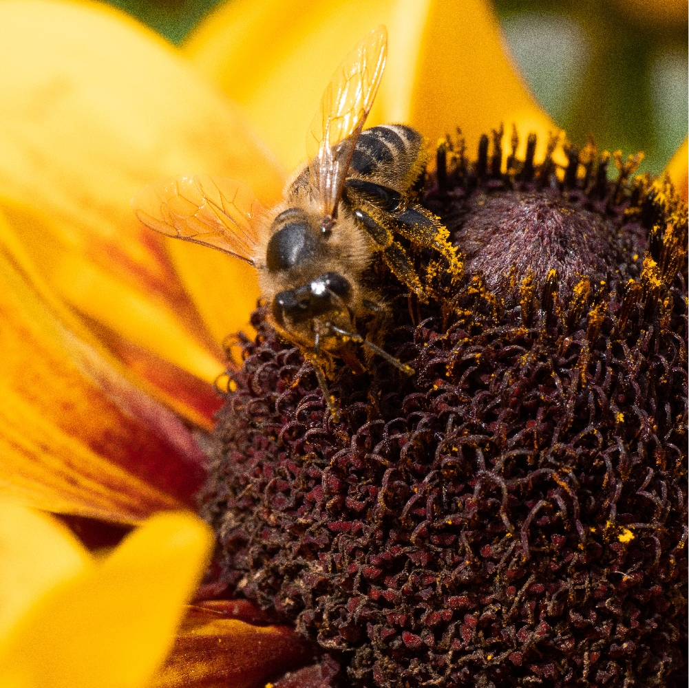 Bee_4