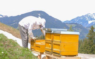 Beefuture und die Bienen bereiten sich auf die kalte Jahreszeit vor…
