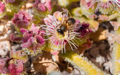 Eine Welt ohne Bienen – ist das möglich?