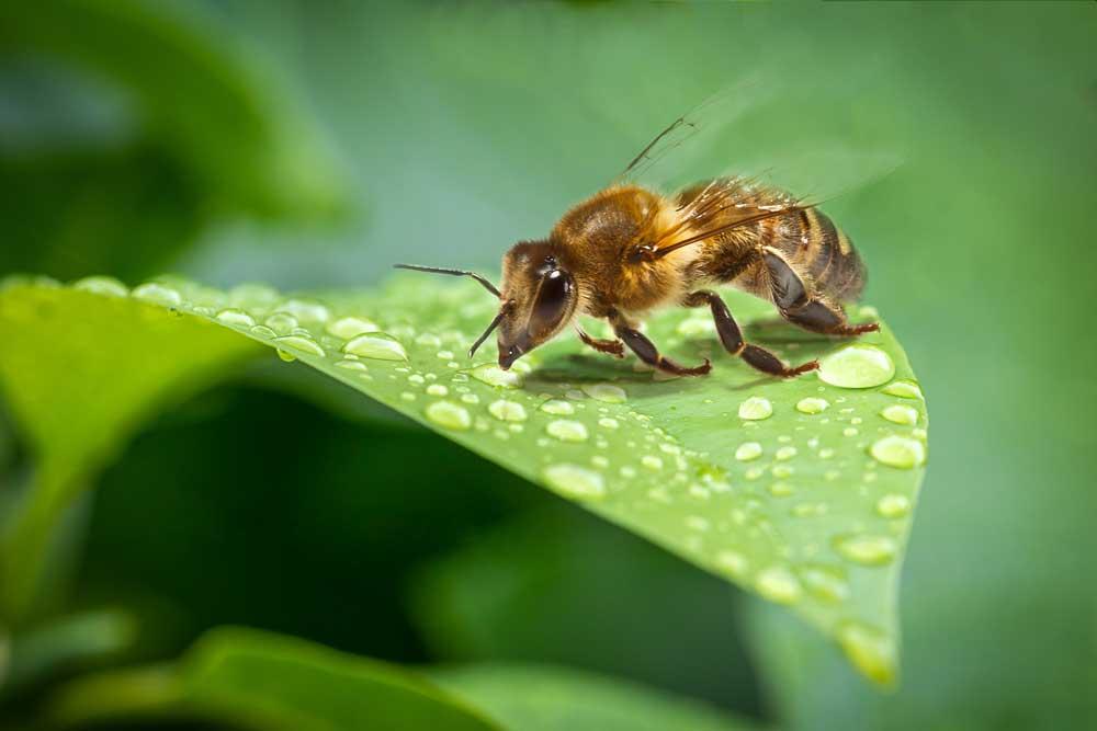 Eine Abkühlung für die Bienen